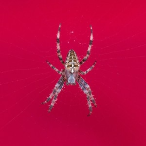 spider today
